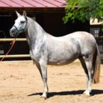 3 most expensive horse breeds in the world
