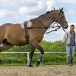 Can you train horses for a living?