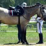How to Choose the Right Equipment for Horse Riding?